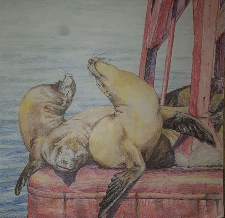 Sea Lions by  Kristin Zedwick